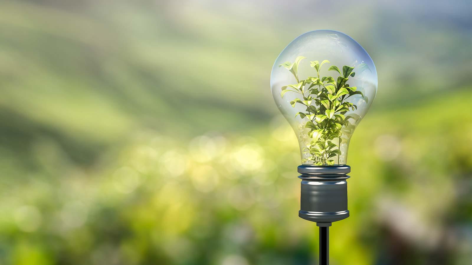 Kansen Milieutechnologieën In Mexico