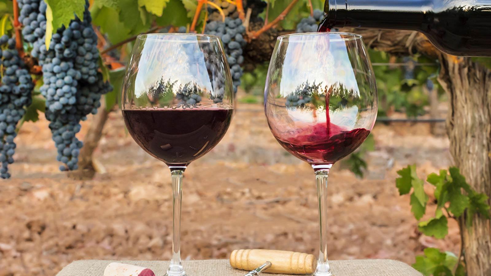 Nieuwe Wetgeving Boost Wijnindustrie Mexico